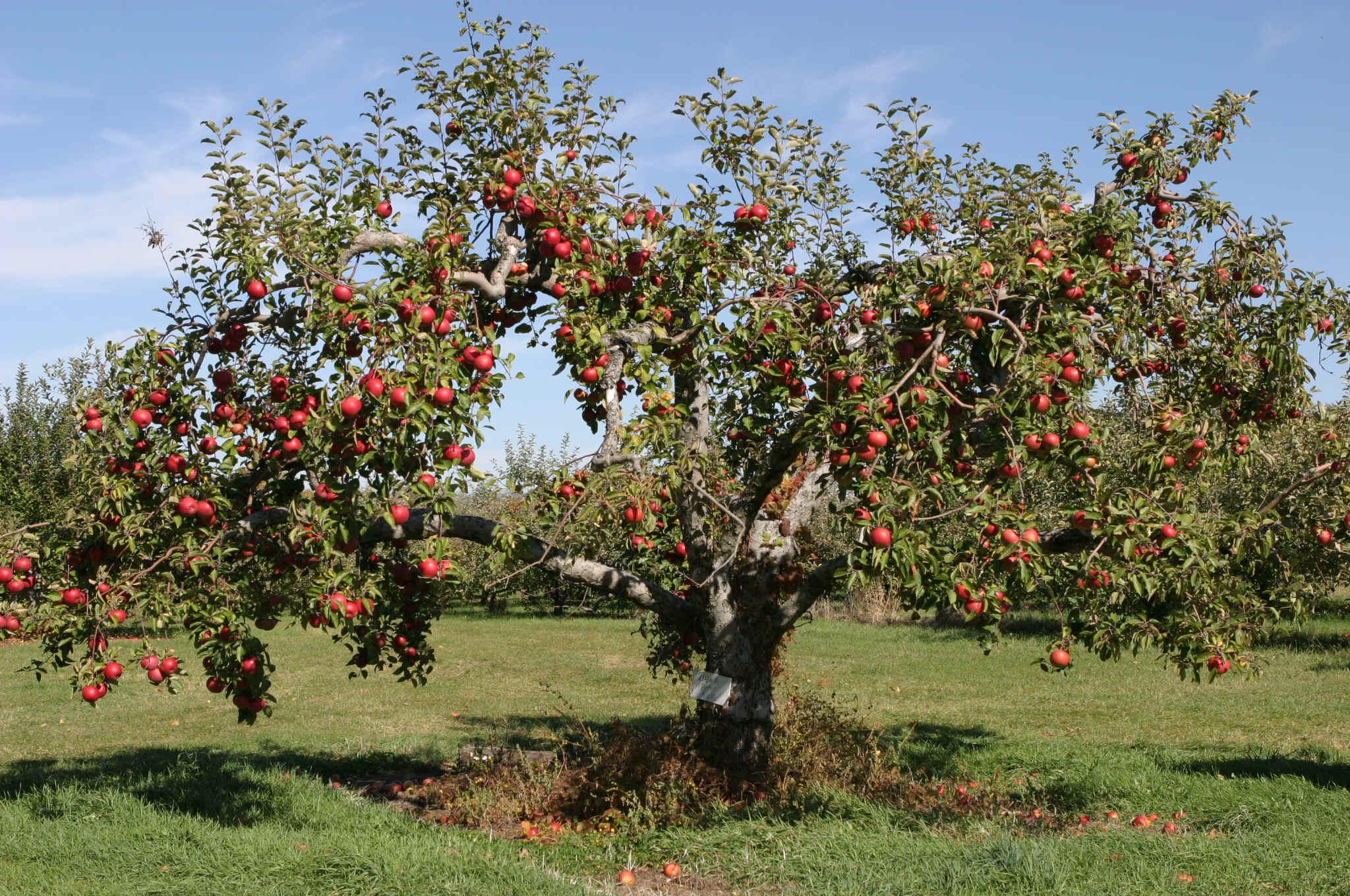 Food plot fruit trees for Fruit trees